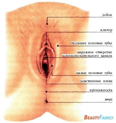 Внутренние половые органы женщины.